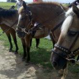 Gettysburg Battlefield Horseback Tour